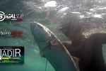 SERRA - TASSERGAL - BLUE FISH